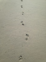 Follow the Footprints of Our Children